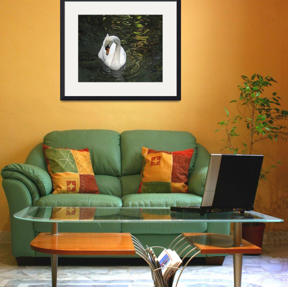 """""""Swan Drinking&quot  (2008) by stockphotos"""