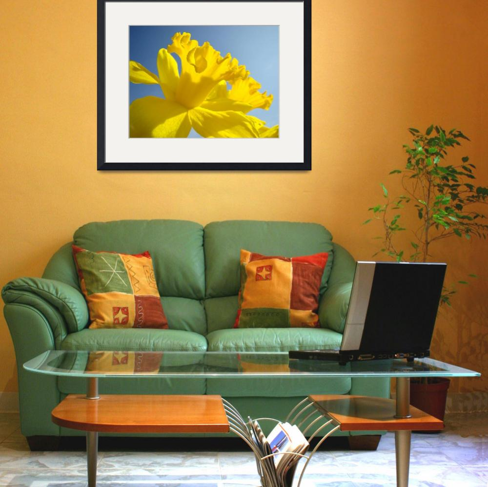 """Spring Artwork Sunlit Daffodil Flowers Floral Art&quot  (2010) by BasleeTroutman"