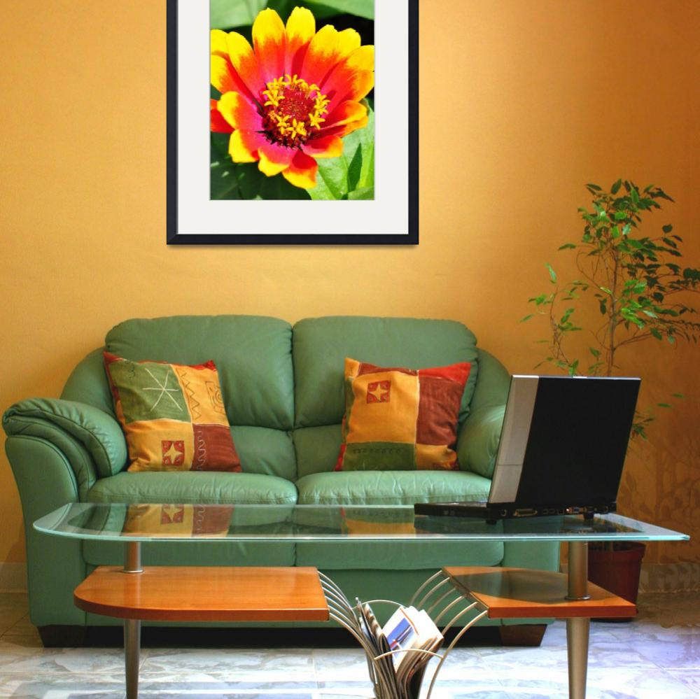 """""""Vibrant Yellow Red Orange Pink flower&quot  (2011) by ElliePhotoArt"""