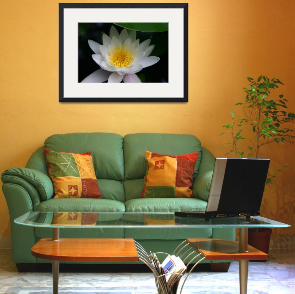 """""""Lotus&quot  (2004) by CreativeExpressions"""
