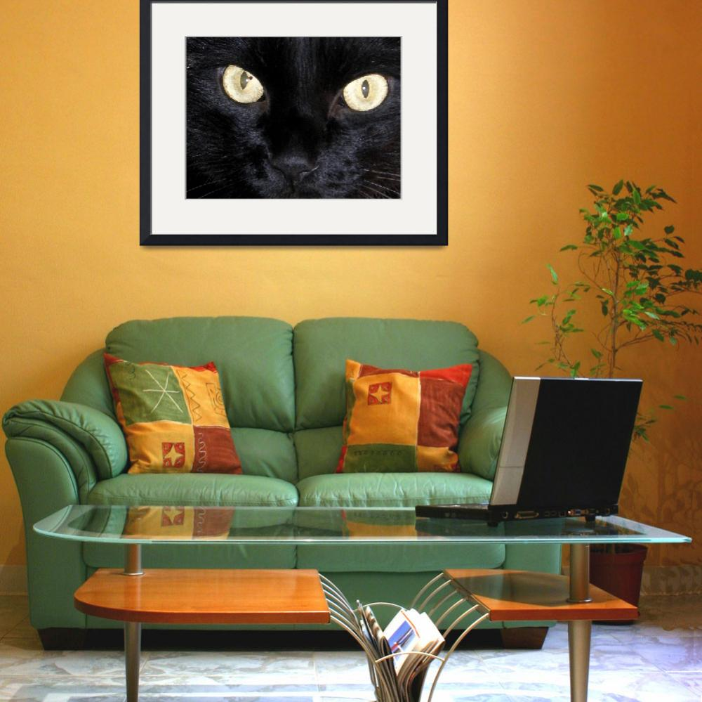 """Black Cat - Astro Eyes&quot  (2008) by jodipflepsen"