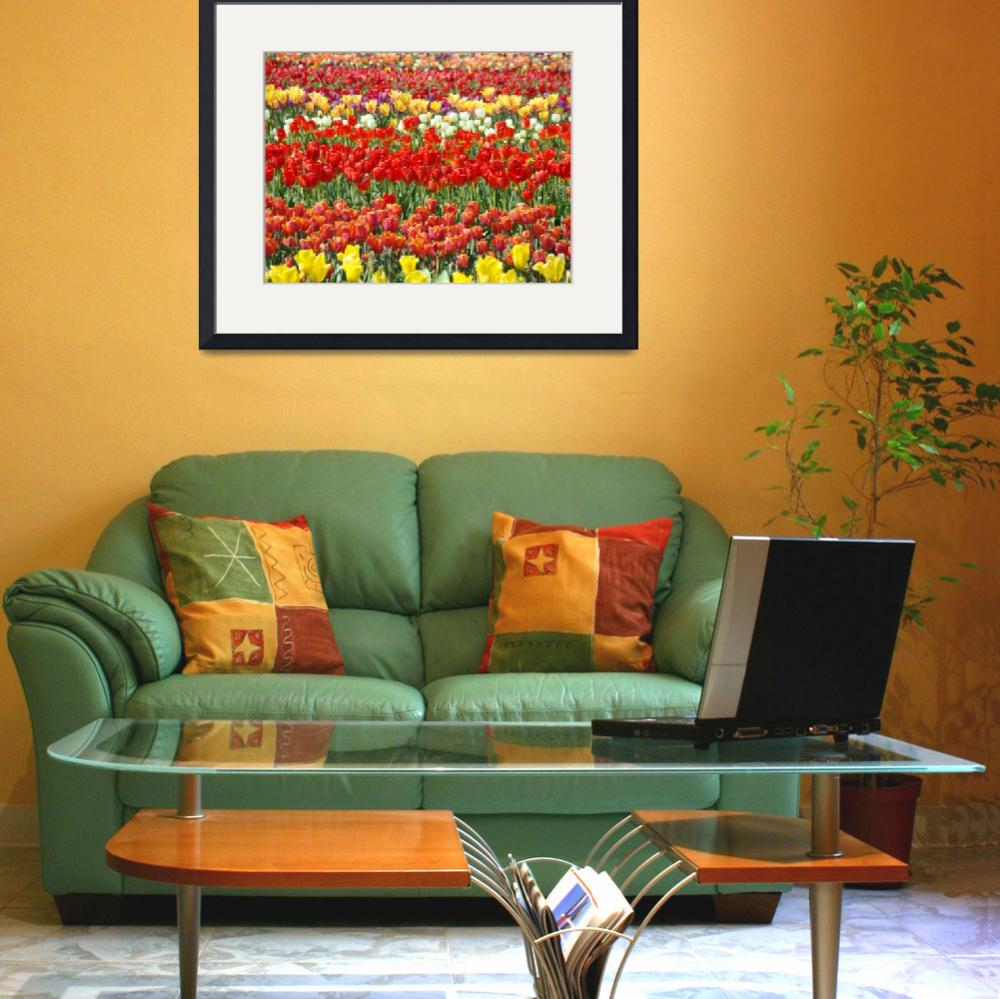 """""""Christmas gifts Colorful Tulip Flowers art prints&quot  (2011) by BasleeTroutman"""