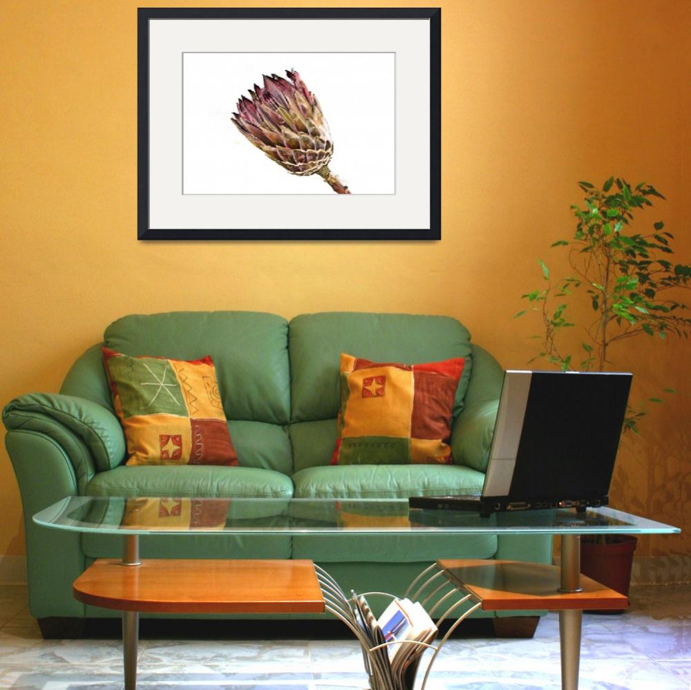 """""""Protea flowerhead&quot  (2010) by maxblack"""