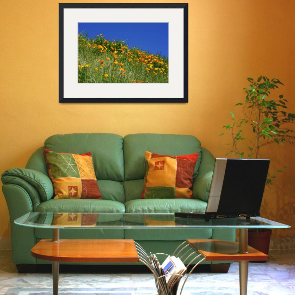 """Poppies Flowers Meadow Photography Art Prints""  (2014) by BasleeTroutman"