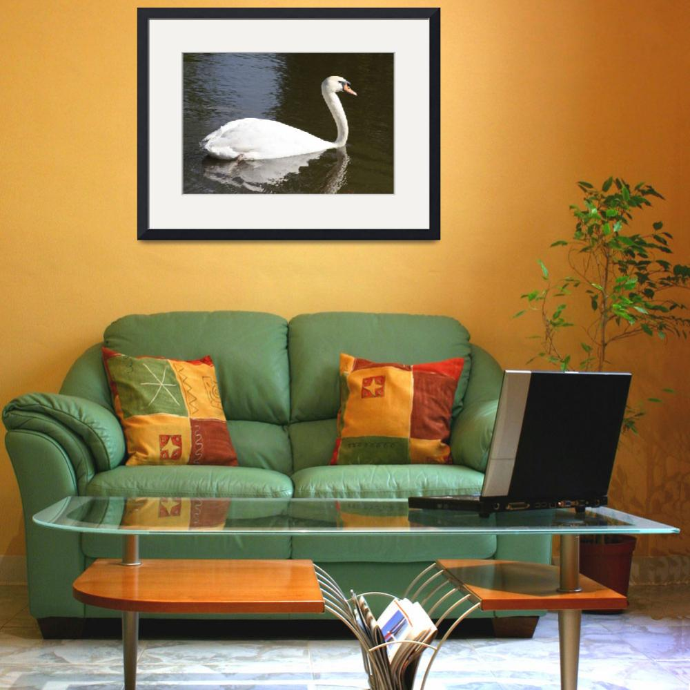 """""""White swan in pond&quot  (2012) by Albertphoto"""
