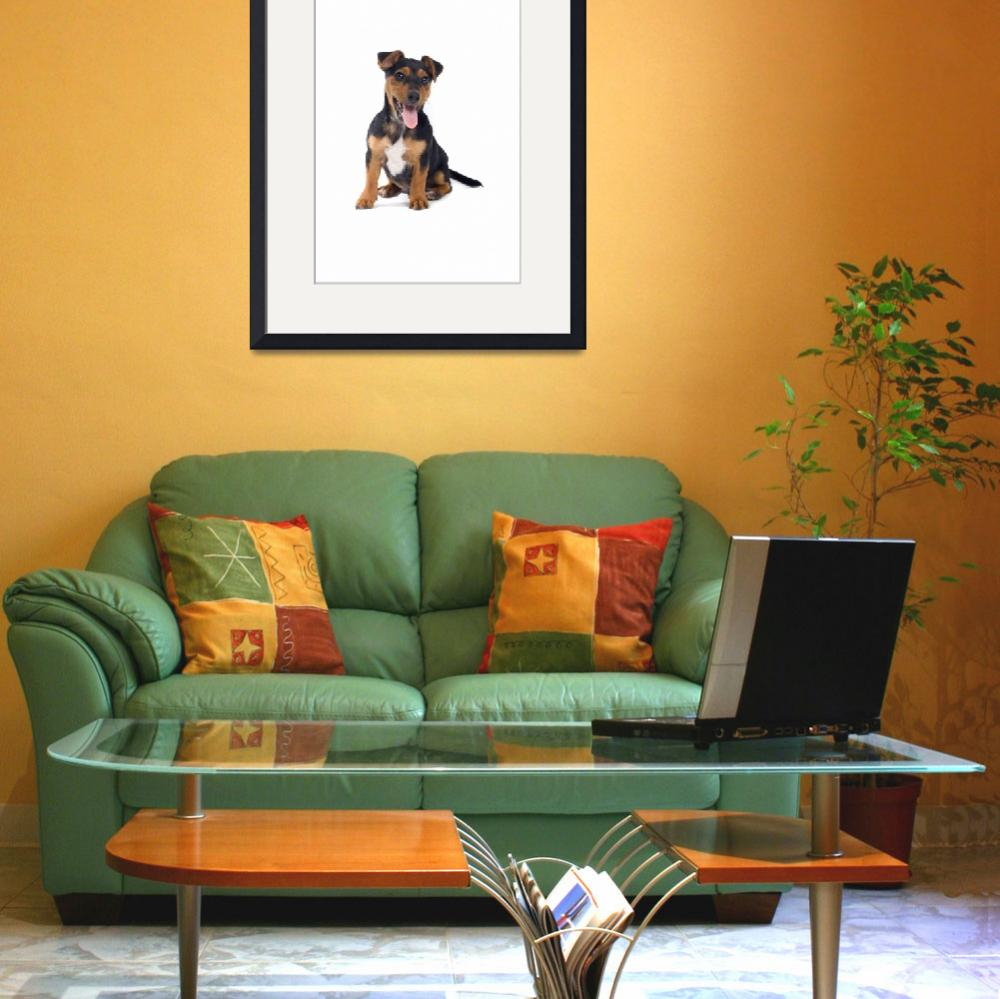 """""""puppy jack russel terrier""""  by esight"""