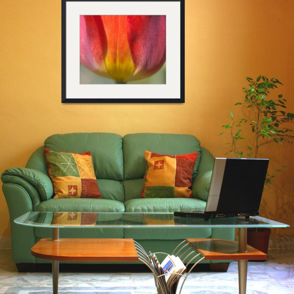 """Simplicity (Red, Orange, & Yellow Tulip)&quot  (2006) by Kari-Gunter-Kremers"