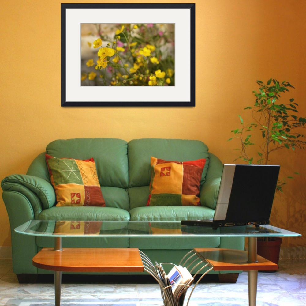 """""""Mellow Yellow&quot  (2009) by AmandaWhitePhotography"""