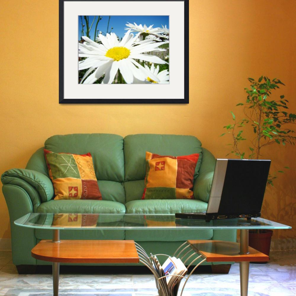 """White Daisy Flower Floral art prints Daisies&quot  (2010) by BasleeTroutman"