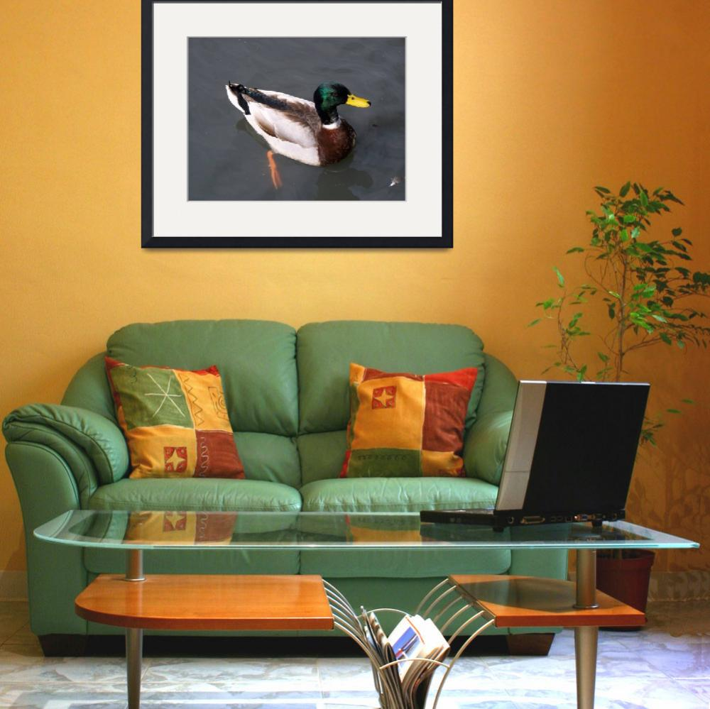 """""""Pretty Duck&quot  (2007) by pvcslc"""