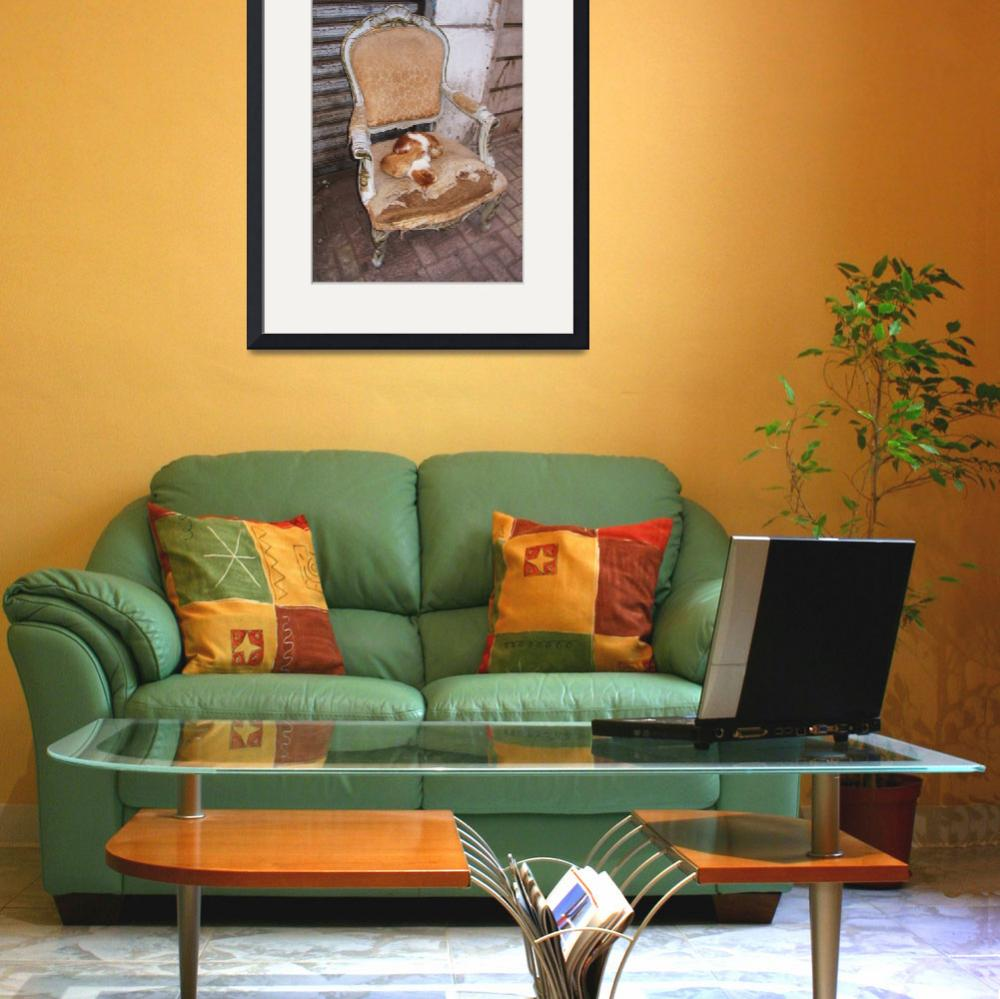 """""""Orange tabby cats resting on a chair - Alexandria&quot  (2010) by arttraveler"""