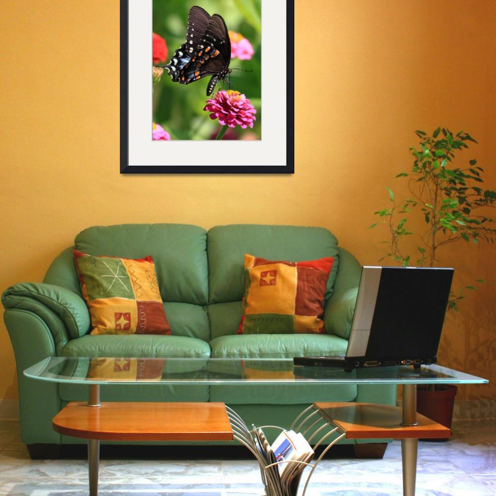 """""""Spicebush Swallowtail""""  (2012) by Tanager"""