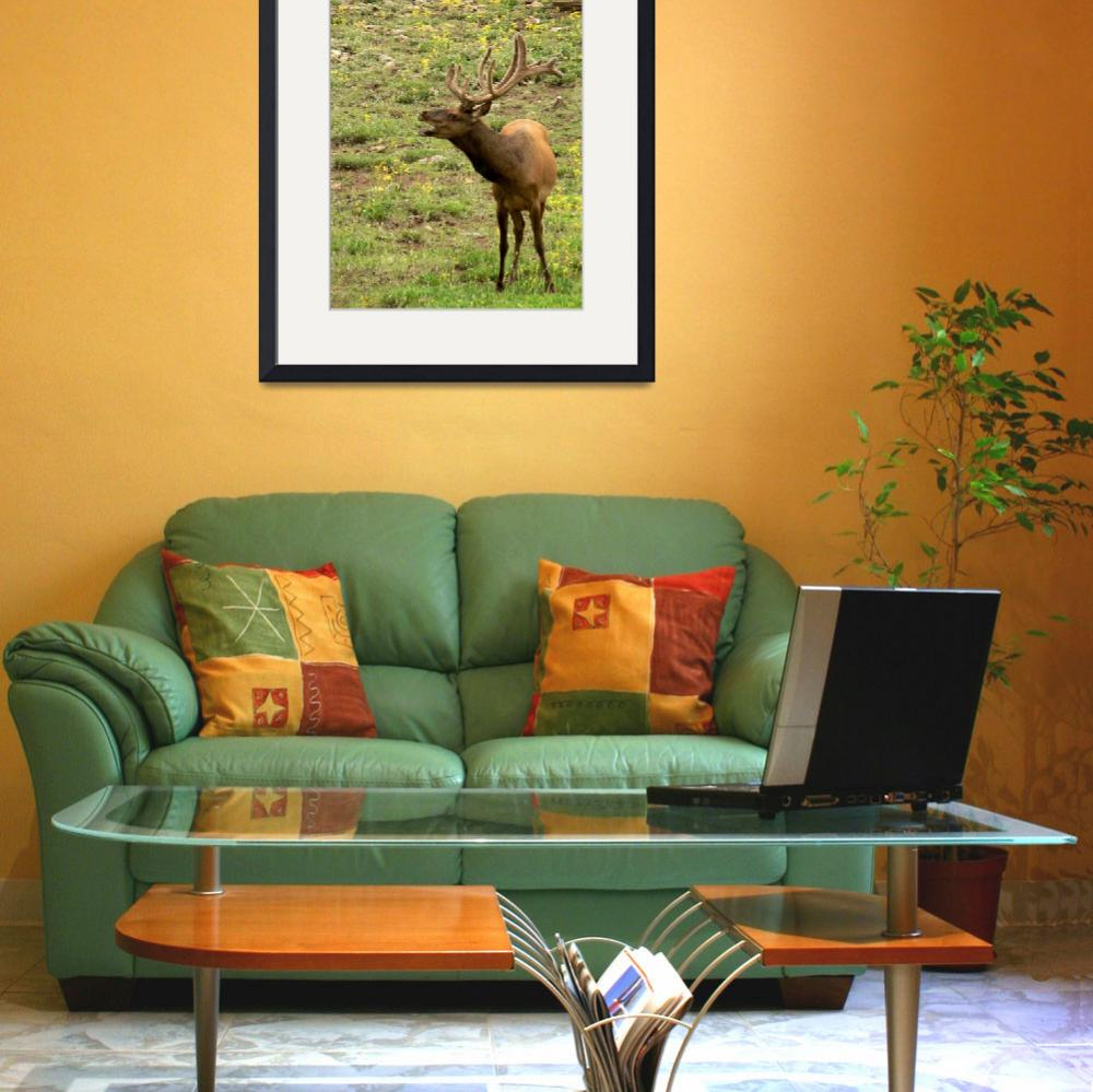 """Talking Elk  P1100258""  (2010) by rayjacque"
