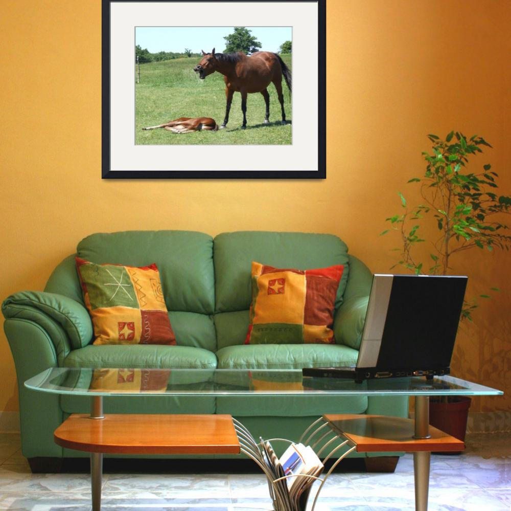 """Horse talk&quot  (2009) by Hartphotography"