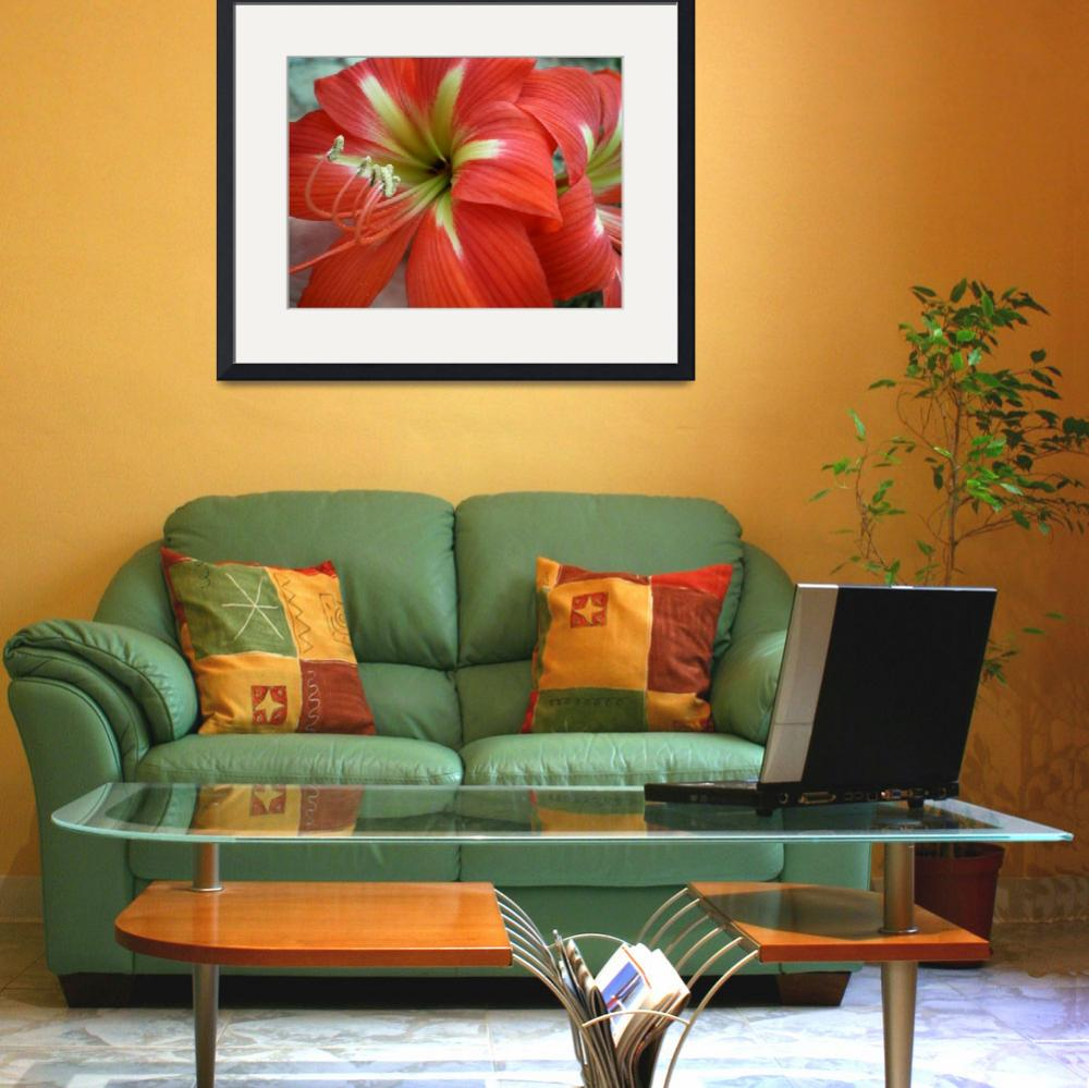 """""""Red Day Lilly&quot  (2008) by HerbDickinson"""
