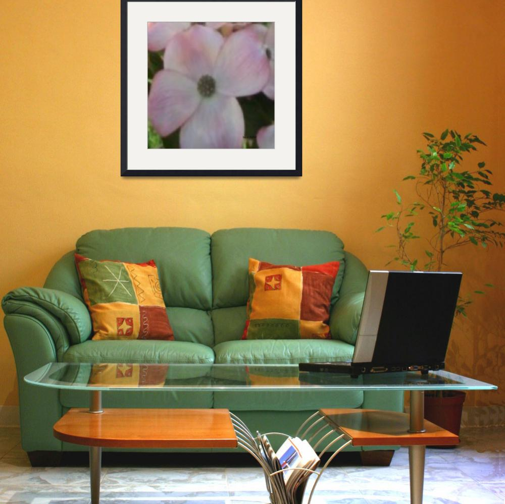 """""""Blooming Pink Dogwood""""  (2010) by hawkephotography"""