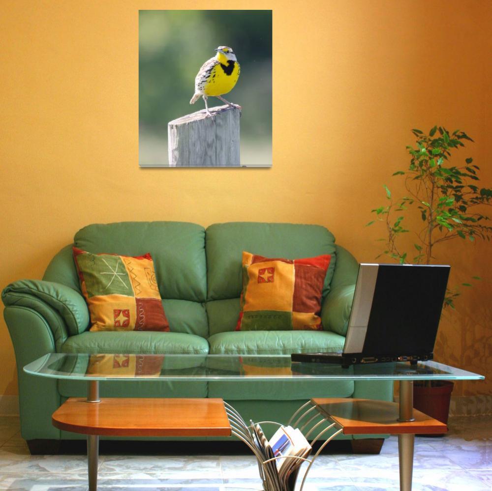 """Eastern Meadowlark""  (2012) by WildAboutNaturePhotography"
