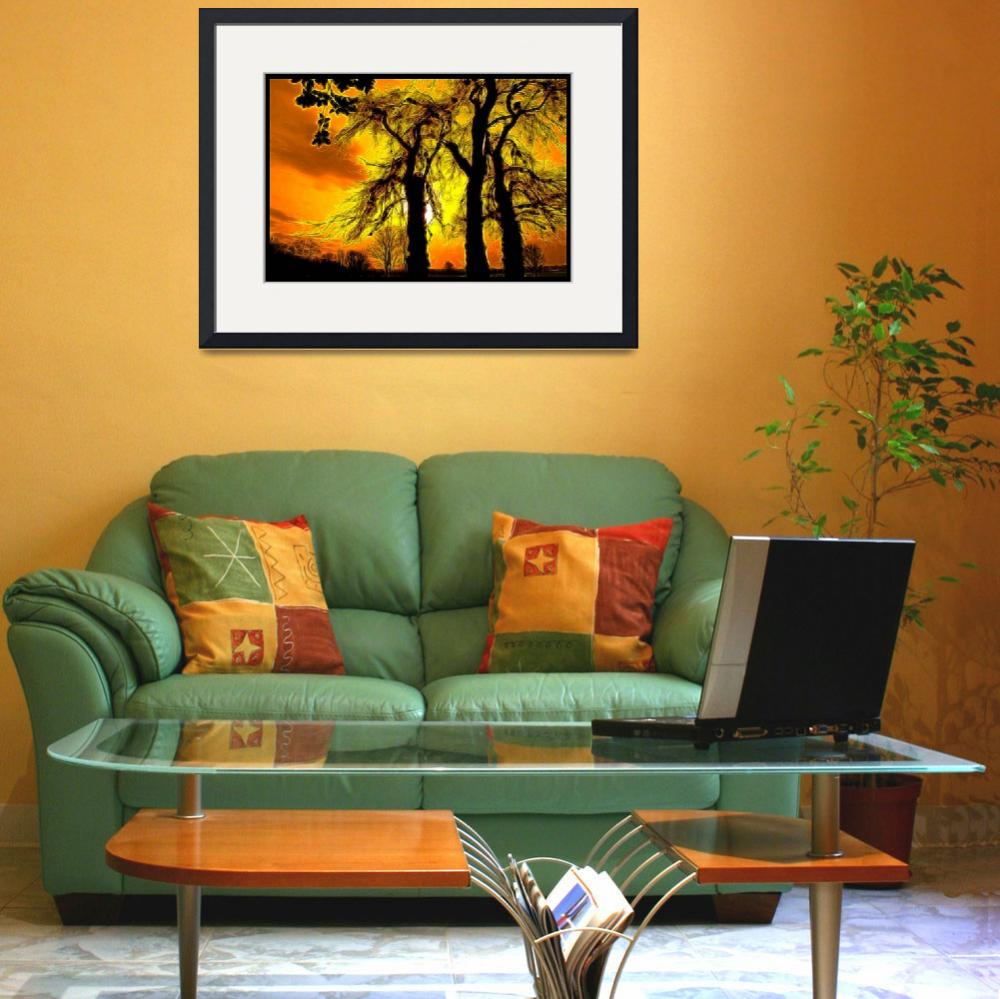 """""""Sun trees&quot  (2008) by jacco55"""
