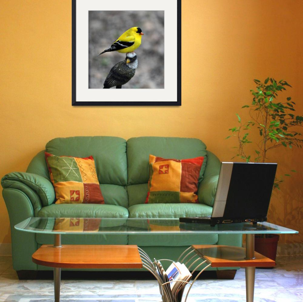 """""""Goldfinches&quot  by cameragal"""