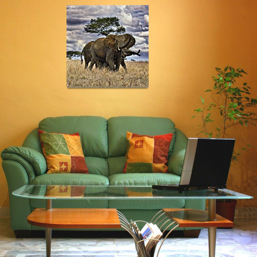 """Elephant Sky&quot  by useatripod"