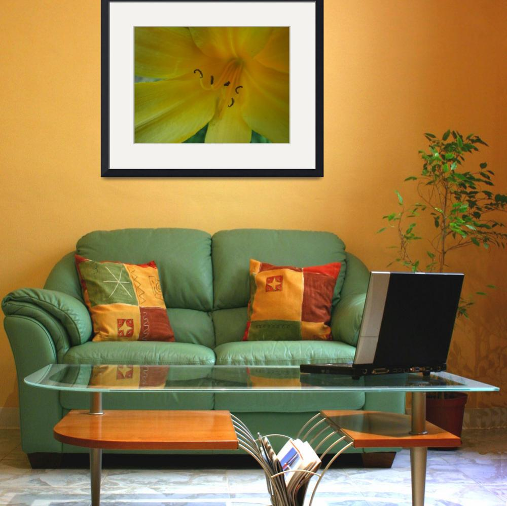 """""""Yellow Lily""""  (2008) by alisonwest"""