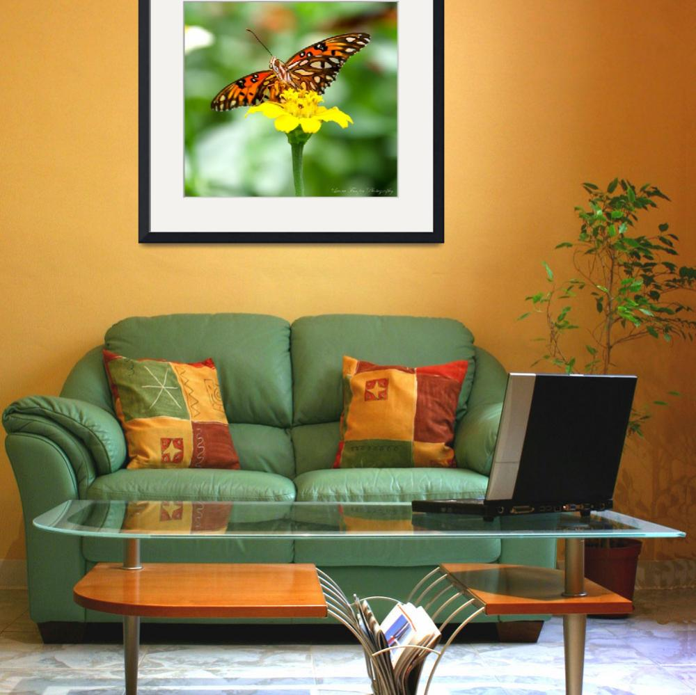 """Gulf Fritillary Butterfly""  (2012) by WildAboutNaturePhotography"