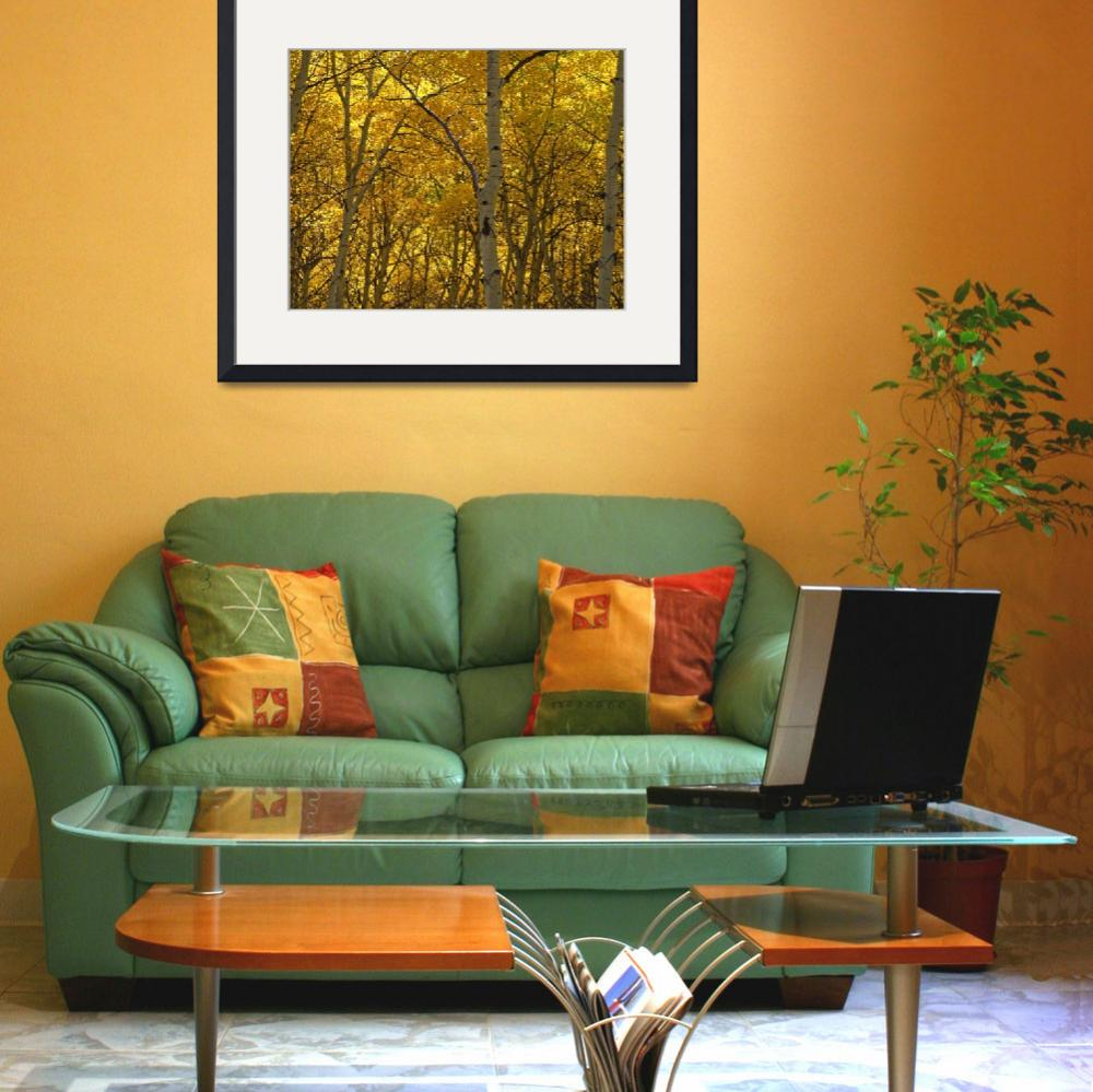 """""""Yellow Trees&quot  (1999) by mikenorton"""