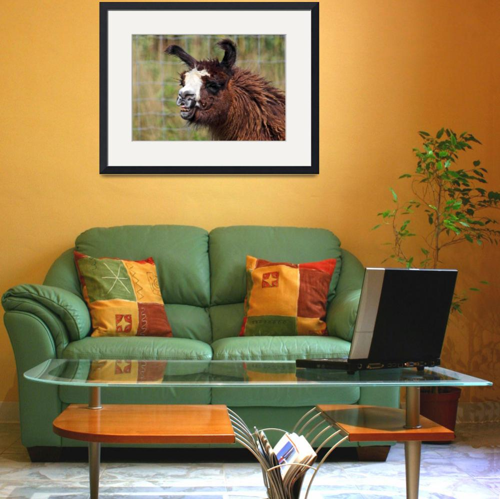 """""""Laughing Llama&quot  (2010) by CampCrazyPhotography"""