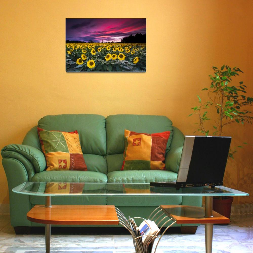 """""""Sunflower Sunset by Cody York-2475&quot  by cyorkphoto"""