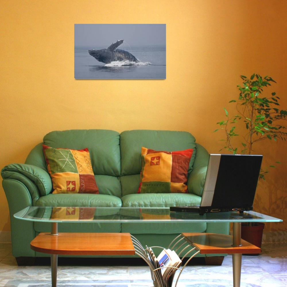"""""""Breaching Humpback Whale I&quot  (2009) by SederquistPhotography"""