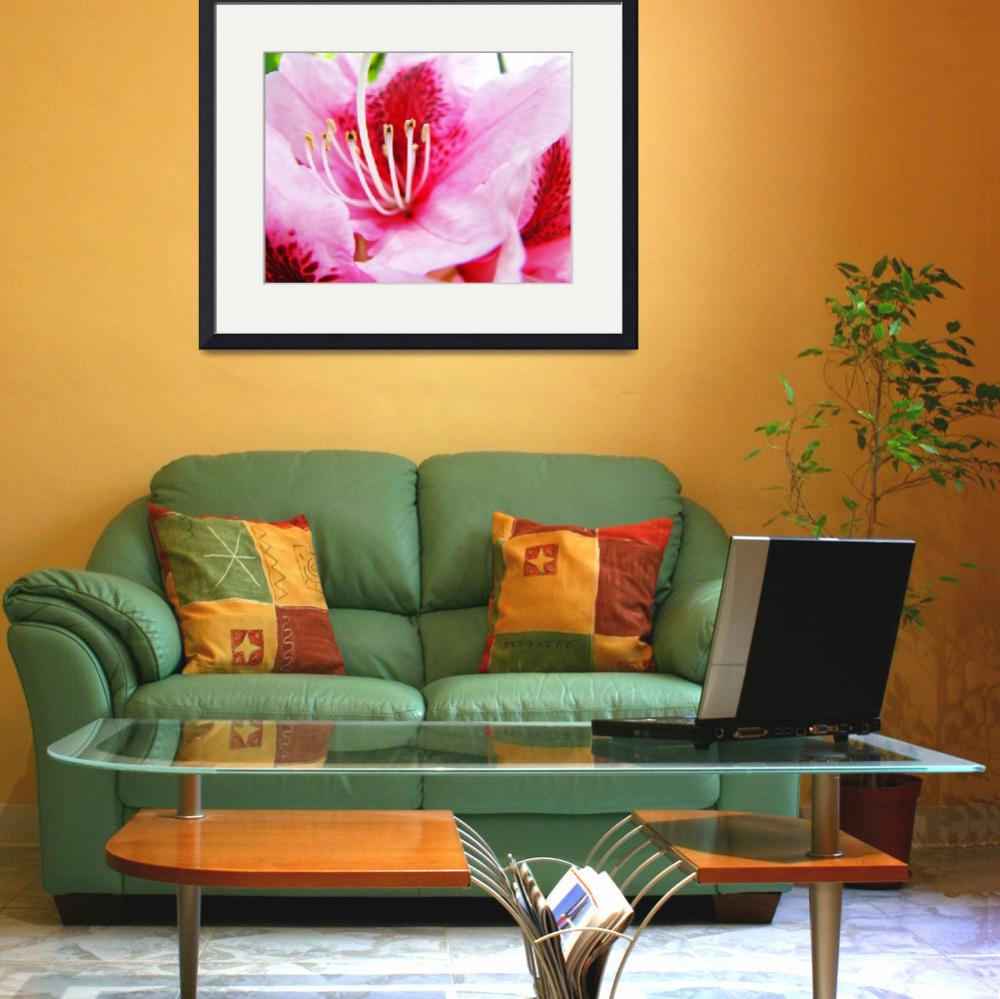 """PINK RHODODENDRUMS Flowers Art Prints Flower""  (2009) by BasleeTroutman"