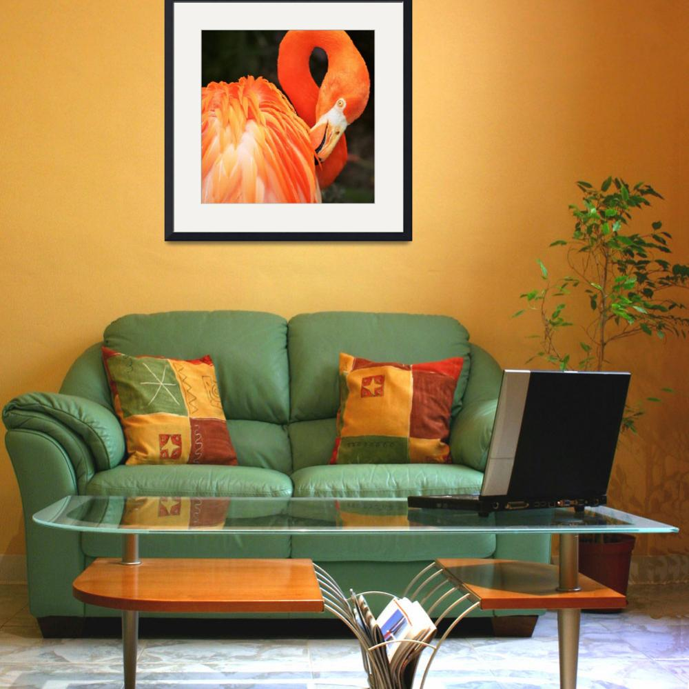 """Flamingo&quot  (2007) by monmoimages"