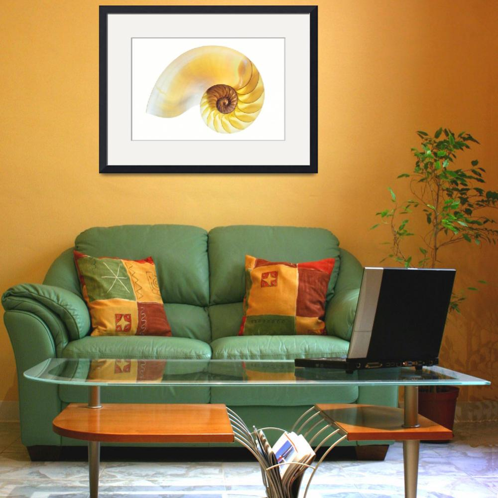 """""""Nautilus Half Shell&quot  (2016) by AnnG"""