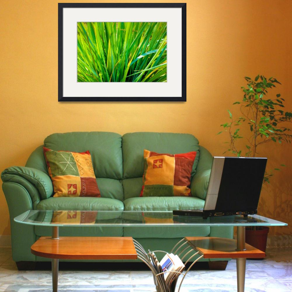 """""""Green Grass&quot  (2009) by andrius"""