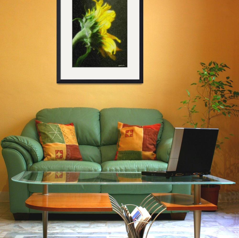 Fine watercolor art for sale -  Sunflower 2 Watercolor 2010 By Christopherinmexico