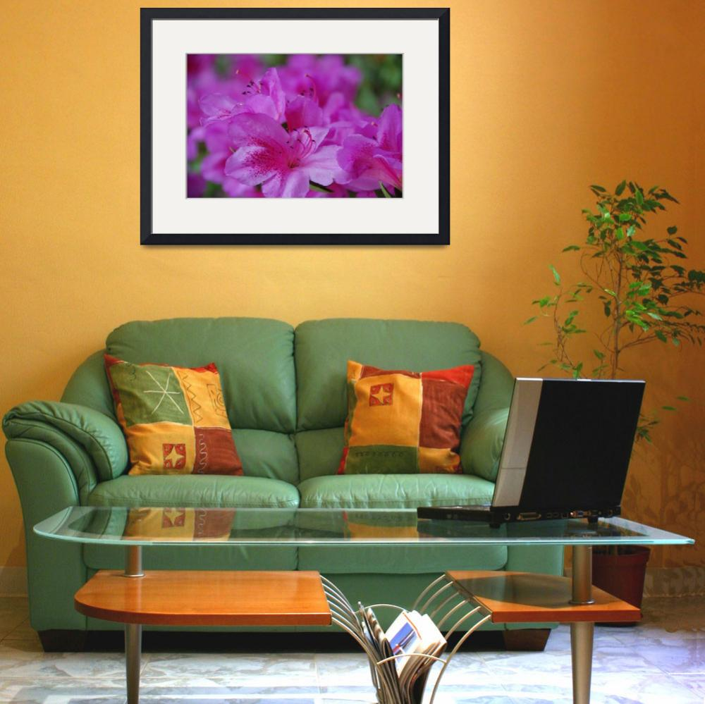 """""""Pink Azalea&quot  (2010) by overbeck"""