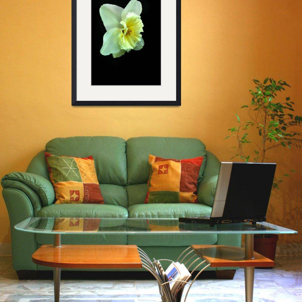"""""""Daffodil Pale Yellow&quot  (2014) by TRELDesign"""