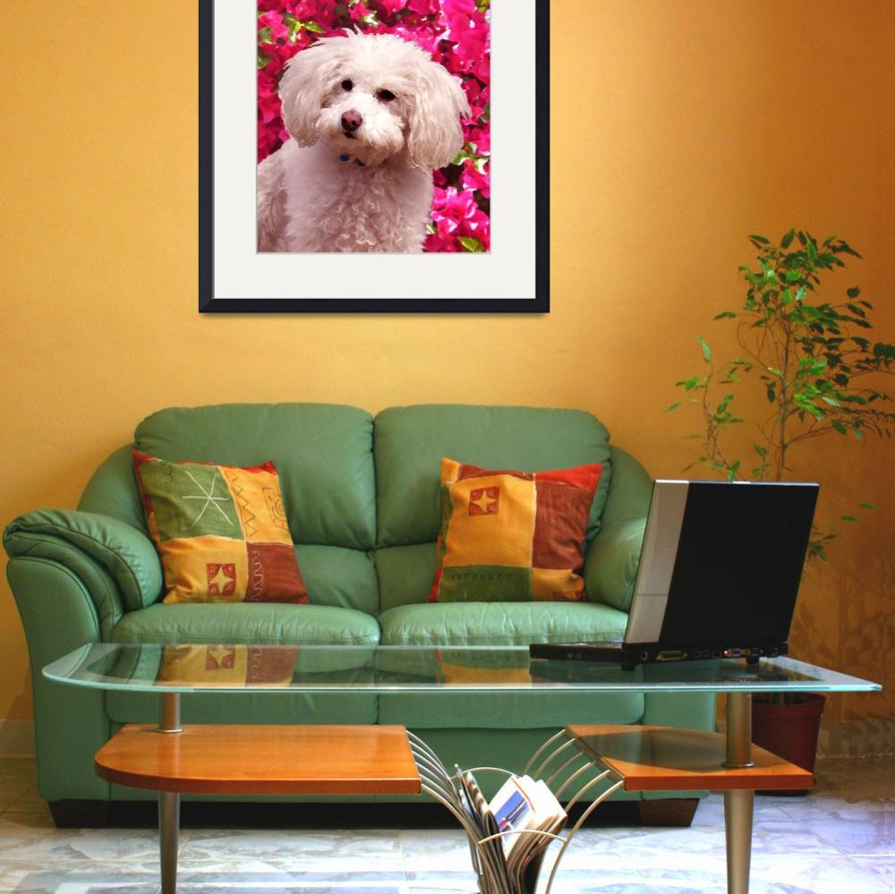 """Poodle on Backgroud of Bougainvillea&quot  (2009) by AmyVangsgard"