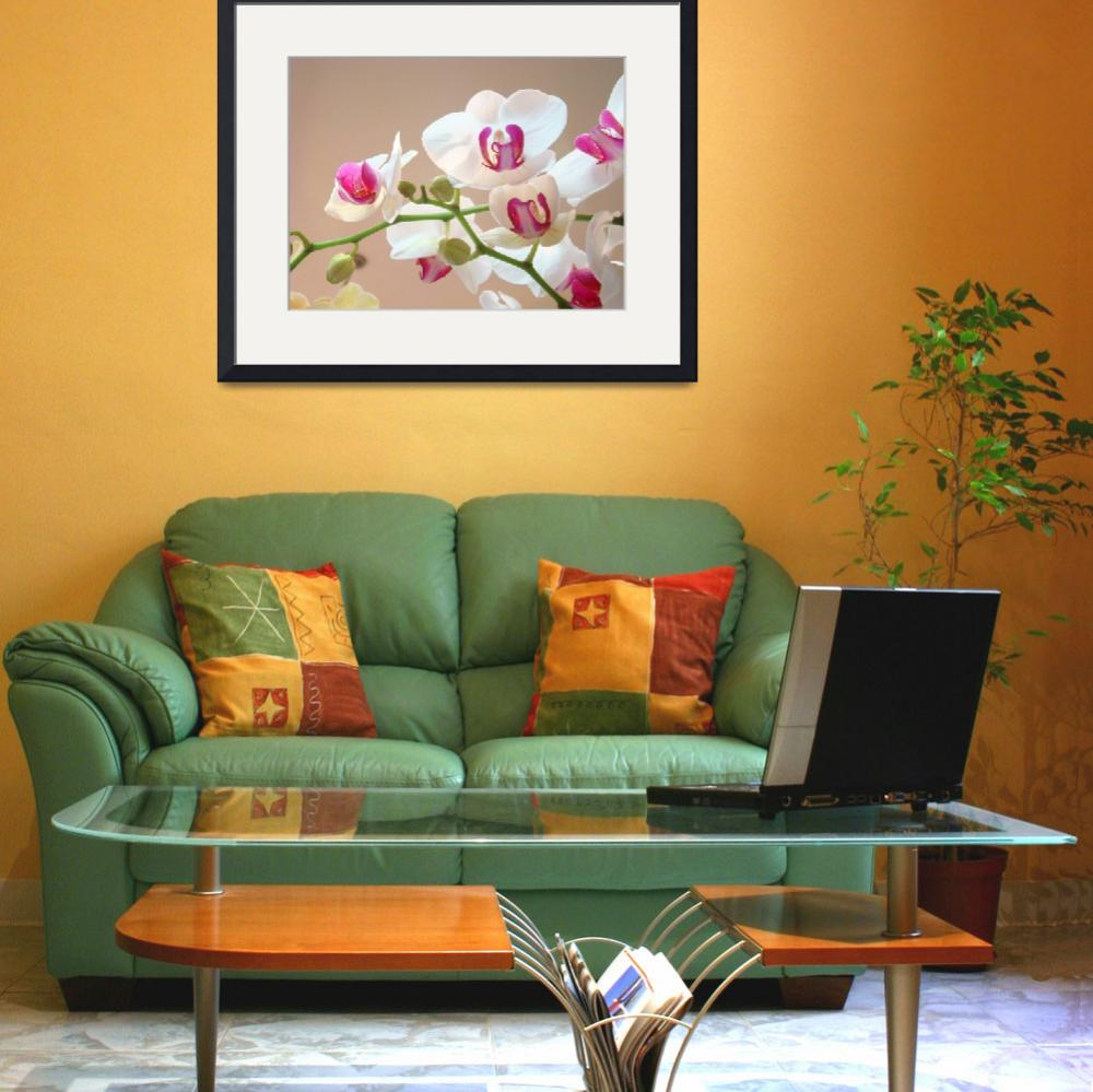 """""""Orchid Flowers art prints floral Orchids""""  (2014) by BasleeTroutman"""