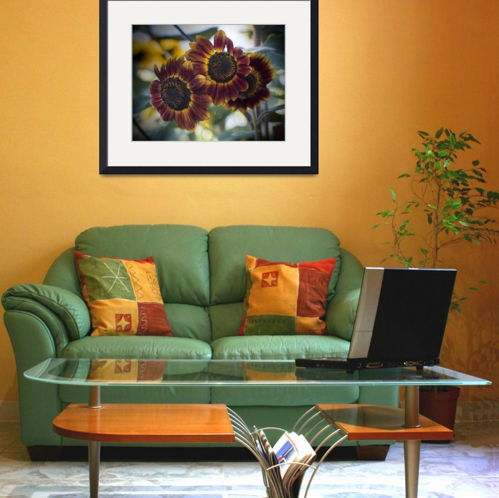 """""""Sunflower Threesome&quot  (2012) by SederquistPhotography"""