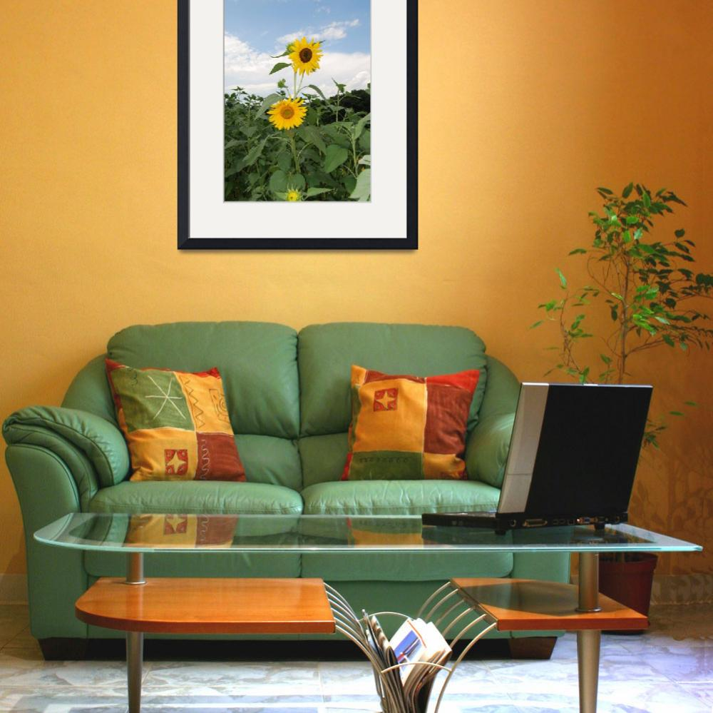 """""""Sunflowers Westminster MD&quot  by joshdgold"""