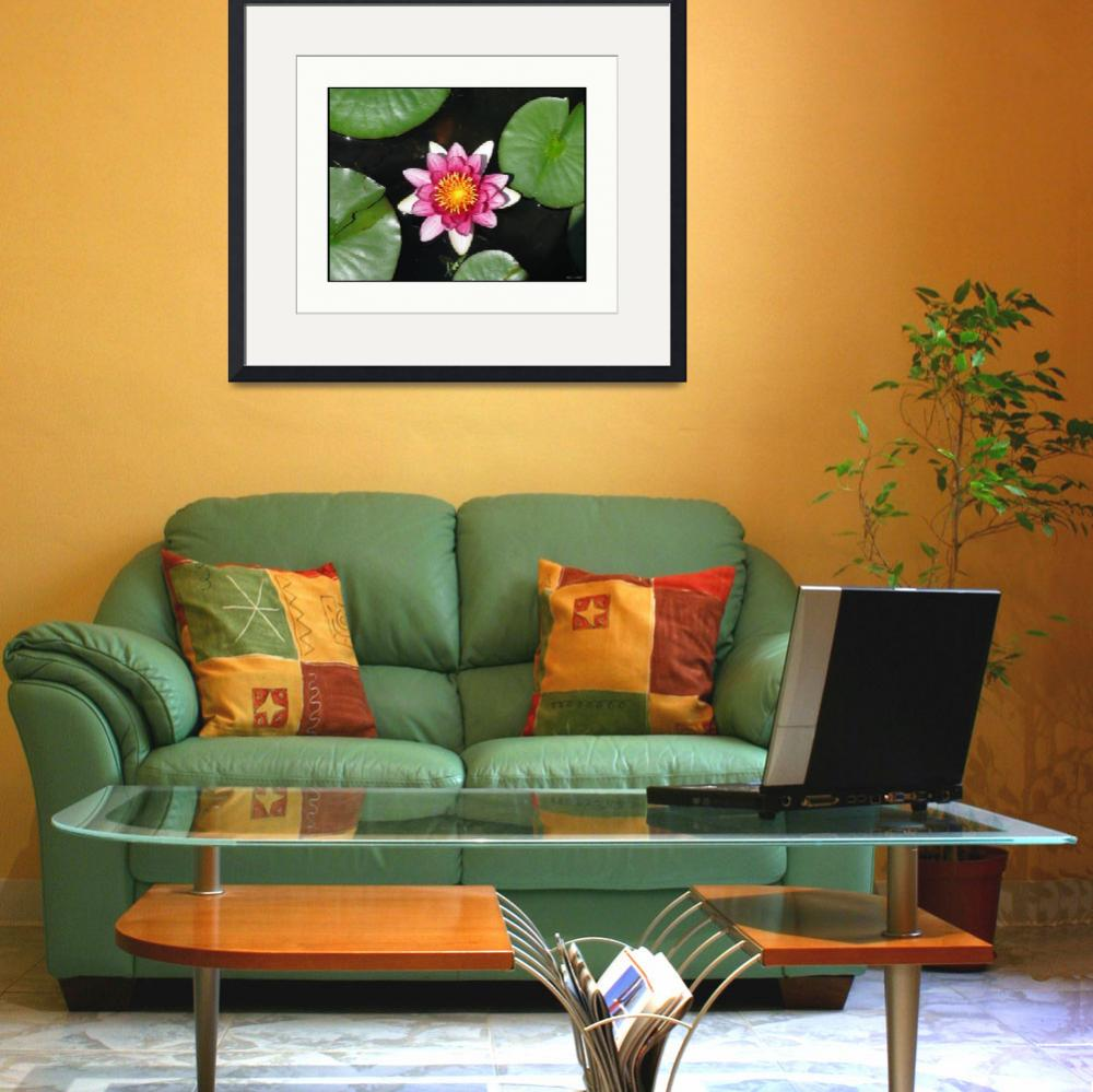"""""""Native Lily Flower Plant and Pads&quot  (2009) by CuriousEye"""