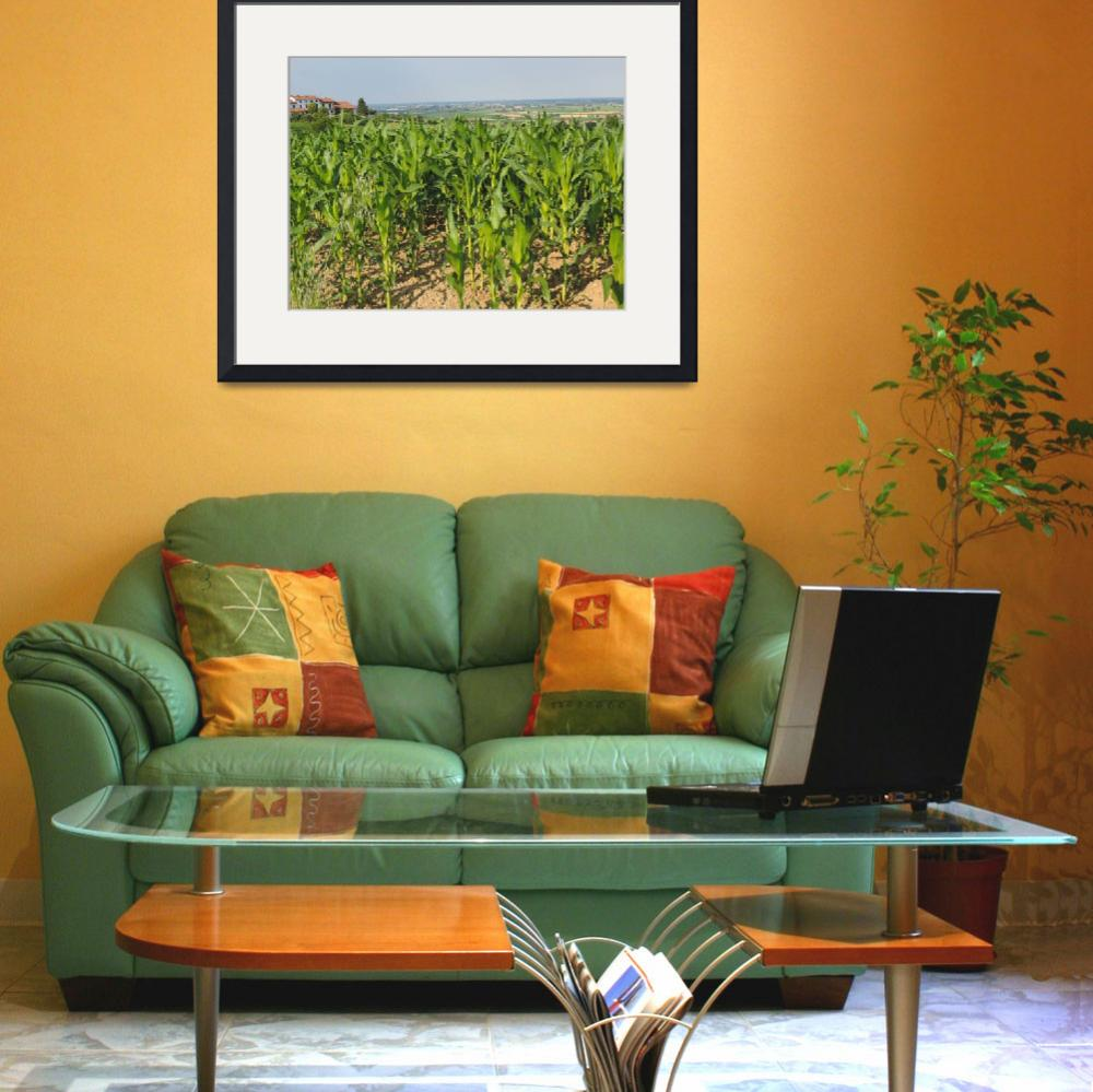 """""""Corn fields on the hill&quot  (2014) by nikpix013"""