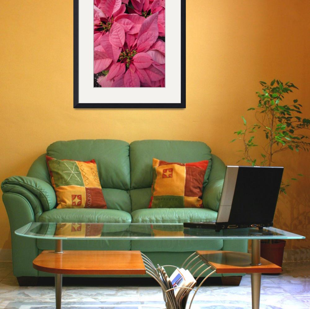 """""""Pink Poinsettias&quot  (2014) by joeyartist"""