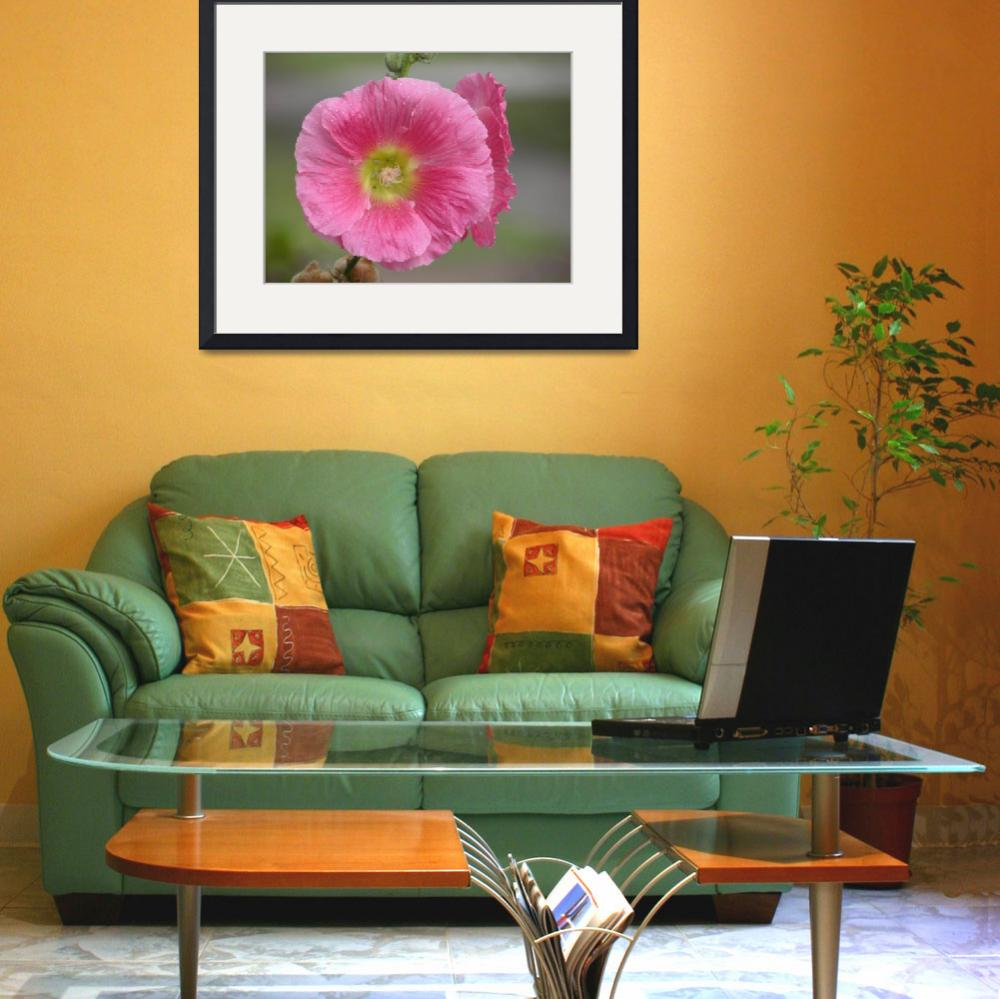 """""""hollyhock 1&quot  (2010) by sb1photography"""
