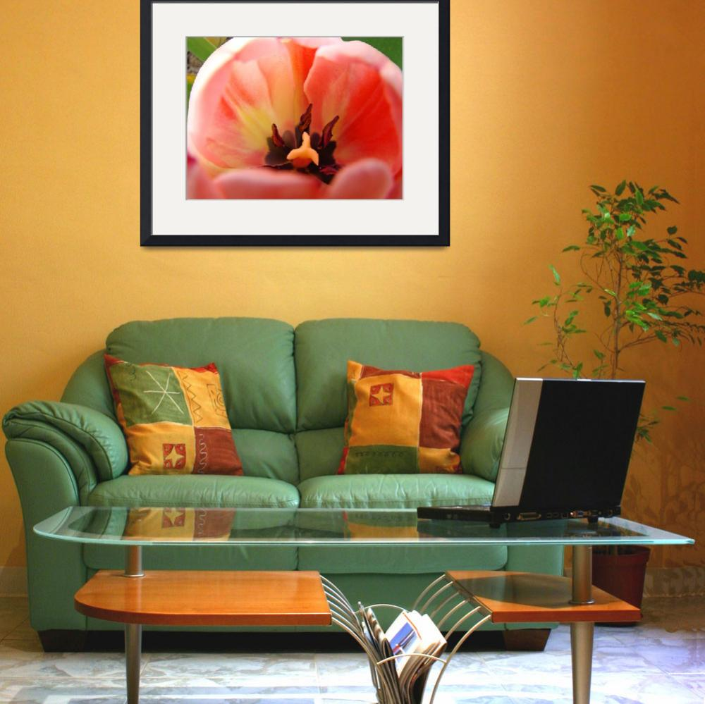 """""""Pink Tulip Flower Close Up art print Floral&quot  (2010) by BasleeTroutman"""