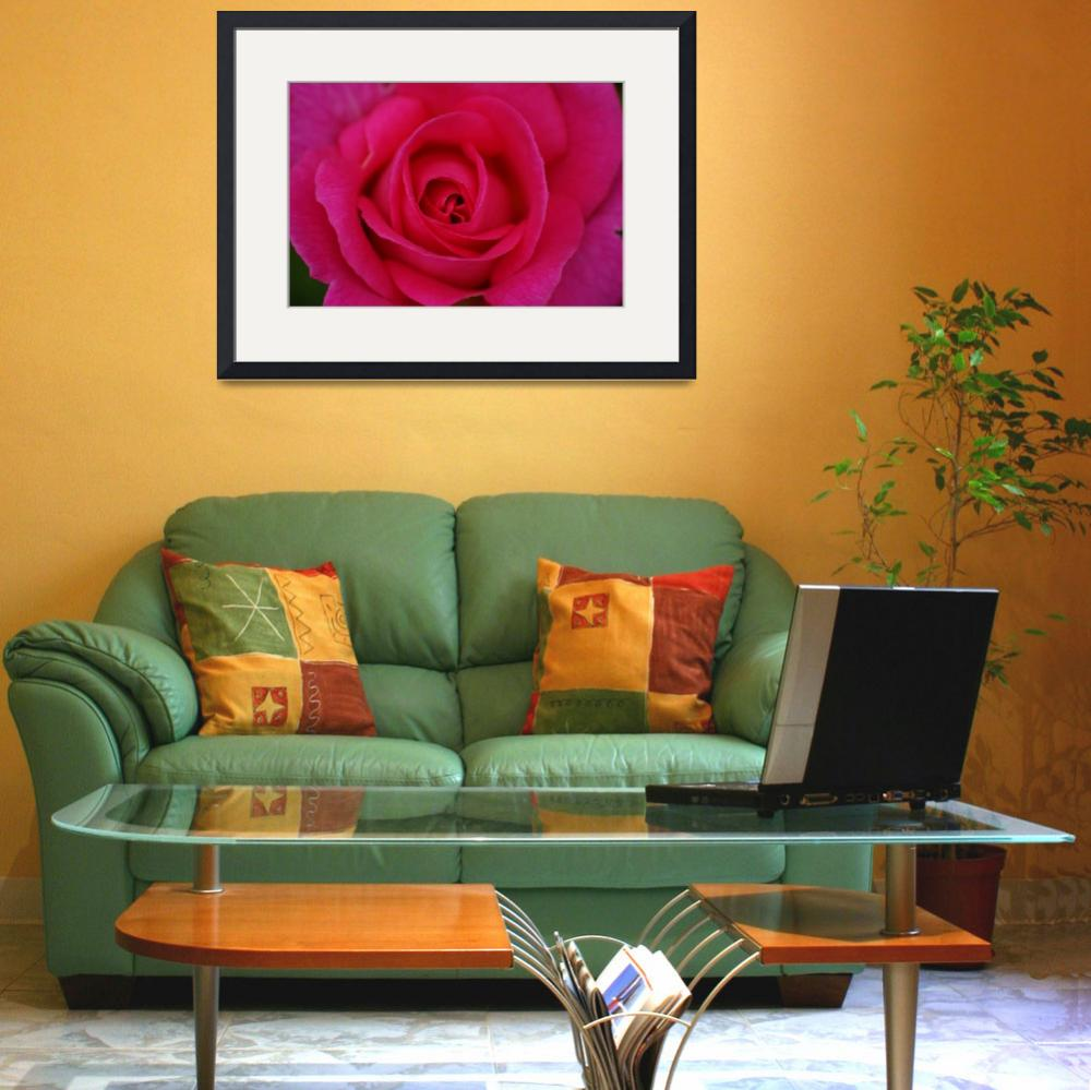 """""""Richmond Rose&quot  (2010) by DPWphotography"""