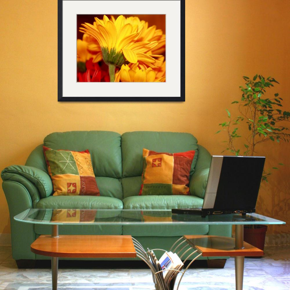 """""""Colorful Daisies""""  (2009) by rayjacque"""