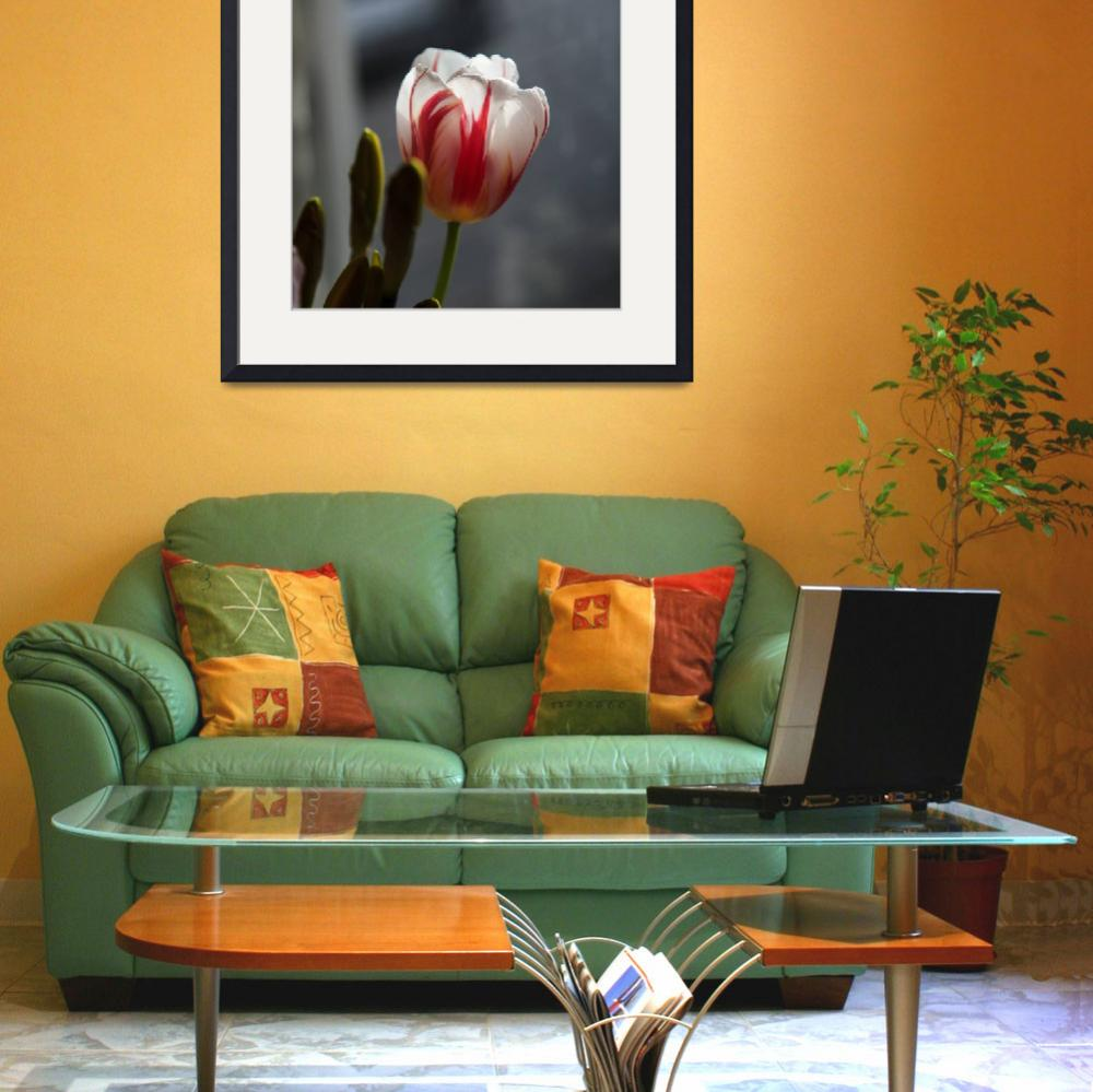 """Rembrandt Tulip""  (2013) by Sonja"