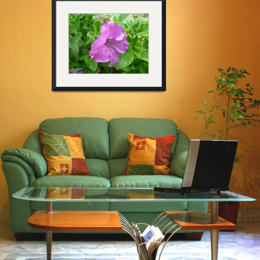 """""""Purple ~ Petunia&quot  (2009) by TheMears"""